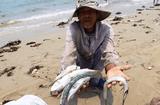 Hiện trường - Ô nhiễm biển miền Trung không có trong 10 sự kiện tài nguyên và môi trường 2016