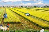 Chính sách mới - Thêm nhiều đối tượng được miễn thuế sử dụng đất nông nghiệp