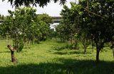 Bí quyết làm giàu - Chiêm ngưỡng trang trại sinh thái Đông Dư