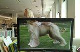Ăn - Chơi - Chết cười với những hình ảnh hài hước của dân văn phòng