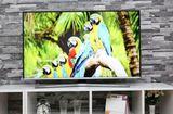 Truyền thông - Thương hiệu - Điện máy Xanh tưng bừng khuyến mãi đón mừng SEA Games 29