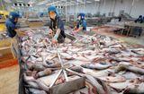 Thị trường - Đại gia thủy sản Hùng Vương thoái vốn, bán đất để duy trì hoạt động