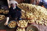 Thị trường - Đà Lạt nhập hơn 100 tấn khoai tây Trung Quốc