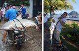 Tin trong nước - Làm rõ thông tin cá mập xuất hiện ở vịnh Hạ Long