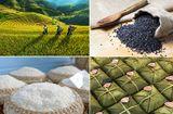 Ăn - Chơi - Gạo nếp nương Điện Biên – hạt ngọc thực tạo nên hương vị bánh chưng ngon nhất
