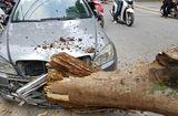Tin trong nước - Cây xanh Hà Nội bất ngờ gãy đổ, đè bẹp 1 ô tô và 3 xe máy