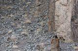 Tin thế giới - Tài ẩn thân siêu việt của động vật: Đố bạn tìm thấy con báo trong bức ảnh