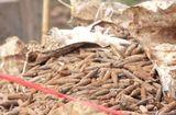 Tin tức - Di dời xong 6 tấn đầu đạn trong bãi phế liệu ở Hưng Yên