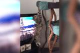 Tin tức - Những chú mèo