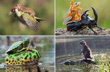"""Tin thế giới - Khoảnh khắc ngộ nghĩnh: Các loài động vật khác loài """"cõng"""" nhau đầy """"âu yếm"""""""