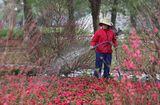 Tin tức - Dự báo thời tiết ngày 12/2: Miền Bắc rét 11 độ, Nam Bộ nắng ấm ngày 27 Tết