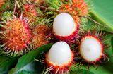 Tin tức - Lần đầu tiên chôm chôm Việt vào được thị trường New Zealand