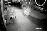 Tin tức - Video: 2 thanh niên đánh ô tô đi trộm... hoa hồng cổ
