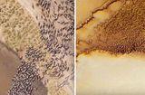 Tin thế giới - Những đàn động vật ngoài hành tinh khổng lồ xuất hiện trong hình ảnh thăm dò của NASA?