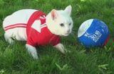 Tin tức - Kỳ lạ chú mèo khiếm thính tiên tri dự đoán kết quả World Cup ở Nga