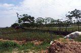 """Tin tức - Khu đô thị AIC Mê Linh: """"Siêu dự án"""" sau 10 năm vẫn là… cánh đồng"""