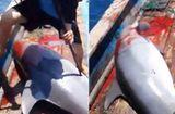 Tin tức - Video ngư dân phóng lao giết cá heo gây phẫn nộ
