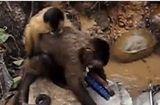 """Tin tức - Video: Chú khỉ """"siêu chăm"""", vừa trông con vừa rửa chậu"""