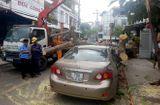 Tin tức - Tin tai nạn giao thông mới nhất ngày 15/8/2018: Cây cổ thụ bật gốc đè bẹp xế hộp giữa phố