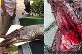 Tin tức - Clip: Kinh hoàng thủy quái nước ngọt tấn công bé gái 9 tuổi