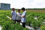 Thị trường - UNIBEN hỗ trợ nông dân thực hiện VietGAP, sản xuất rau an toàn, hướng tới phát triển vùng nguyên liệu sạch