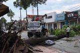 Tin tức - Đồng Nai: Mưa lớn kèm lốc xoáy khiến hàng loạt cây xanh, cột điện gãy đổ