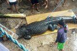 Tin tức - Video: Bẫy được cá sấu khổng lồ nghi ăn thịt một ngư dân
