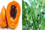 Sức khoẻ - Làm đẹp - 3 bài thuốc dân gian chữa đau vai gáy hiệu nghiệm