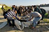 Tin thế giới - Thảm họa chìm phà tại Iraq: Con số tử vong lên tới gần 100 người