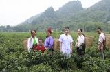 Y tế sức khỏe - Lương y Hoàng Văn Tuấn: Kho thuốc sống của dân tộc Mường Hoà Bình