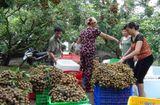 Quyền lợi tiêu dùng - Xã Bình Kiều (Khoái Châu, Hưng Yên): Tích cực hoàn thiện, cán đích nông thôn mới