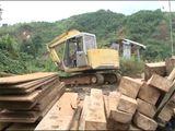 Xã hội - Clip: Hàng chục mét khối gỗ chôn gần xưởng mộc
