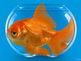 Sức khoẻ - Khám phá 4 bí mật về loài cá cảnh