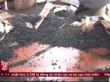 Video-Hot - Rùng mình nạn bọ đậu đen tấn công nhà dân tại Bình Phước