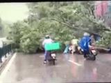 Video-Hot - Hàng chục người dừng xe để cứu người bị cây đè