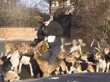 Video-Hot - Video: Xem đàn chó săn hung dữ truy đuổi, xé xác cáo