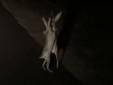 Video-Hot - Video 2 con thỏ đánh nhau trong đêm hút hàng triệu lượt xem