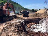Quảng Ninh tiêu hủy gần 7 tấn lợn chết bốc mùi