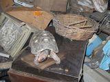 """Con trai phát hiện sự thật """"rúng động"""" sau 30 năm con rùa cưng biến mất"""