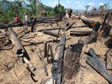 Vụ phá rừng Quảng Nam: Đứng sau phải có chủ mưu, phải là người có tiền, có trình độ!