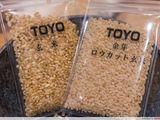 Loại gạo đắt nhất thế giới: 2,5 triệu đồng/kg vẫn