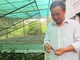 Liều lĩnh nuôi cà cuống, chủ trang trại thu tiền triệu mỗi ngày