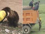 Tin tức - Video: Gấu suýt mất mạng vì kẹt đầu vào xô