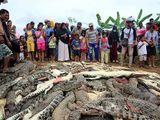 Indonesia: Dân làng tàn sát gần 300 con cá sấu sau cái chết của người đàn ông xấu số