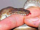 Mùa mưa hay bị rắn cắn: Cần biết kỹ năng này để thoát chết