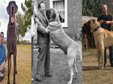 Clip: 10 giống chó lớn nhất thế giới được các đại gia săn lùng