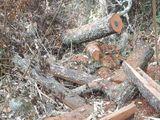 Bắt tạm giam các đối tượng phá rừng tại Vườn quốc gia Phong Nha - Kẻ Bàng