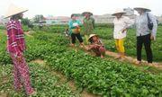 Người trồng rau ở Thanh Hóa đề nghị  VTV bồi thường sau vụ