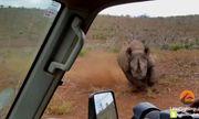 Tê giác hùng hổ lao vào ô tô, du khách hoảng loạn