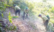 5 năm góp sức giữ màu xanh cho rừng